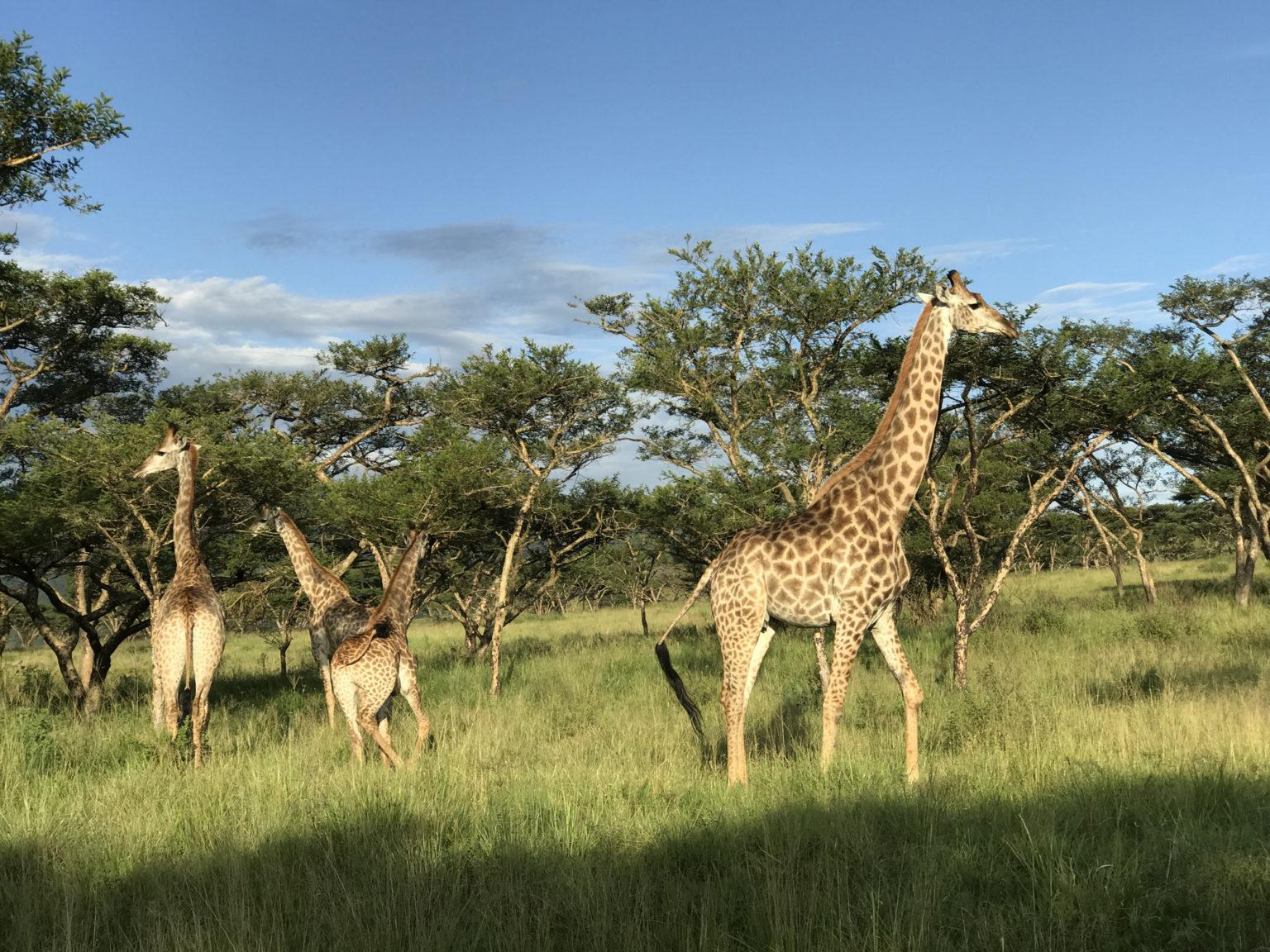 Африка1.jpg
