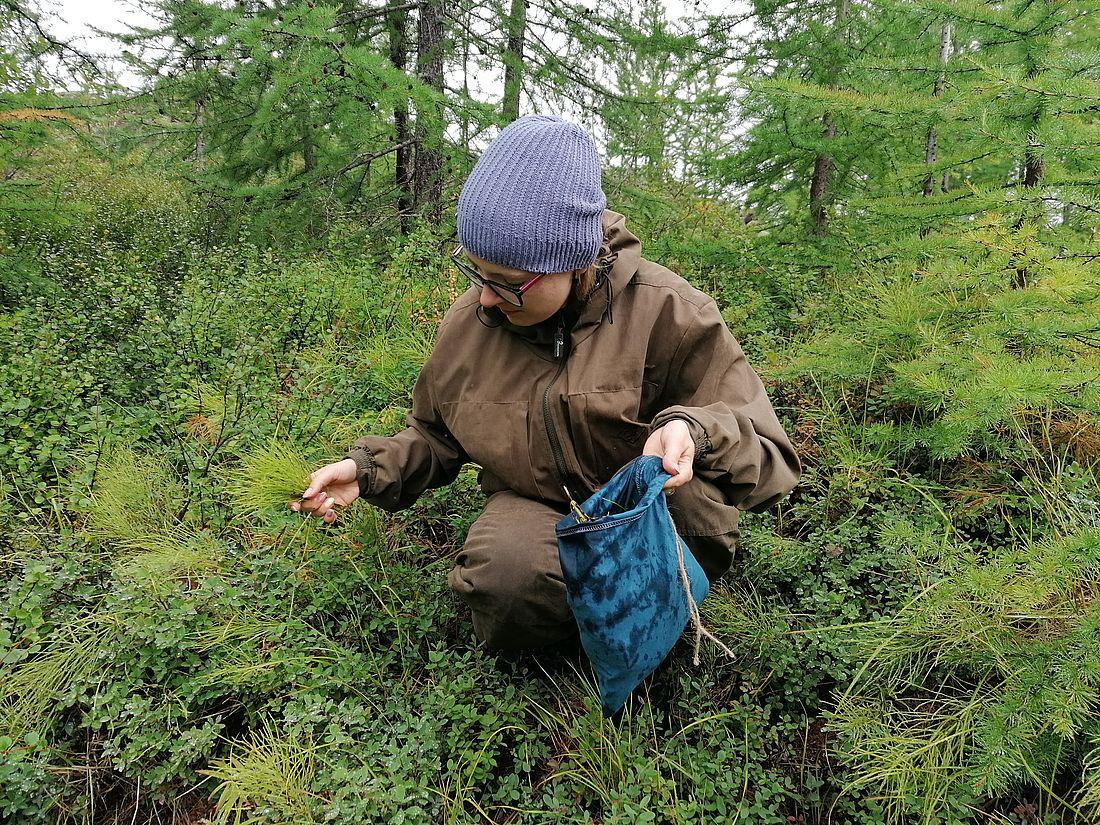 изучение леса2.jpg