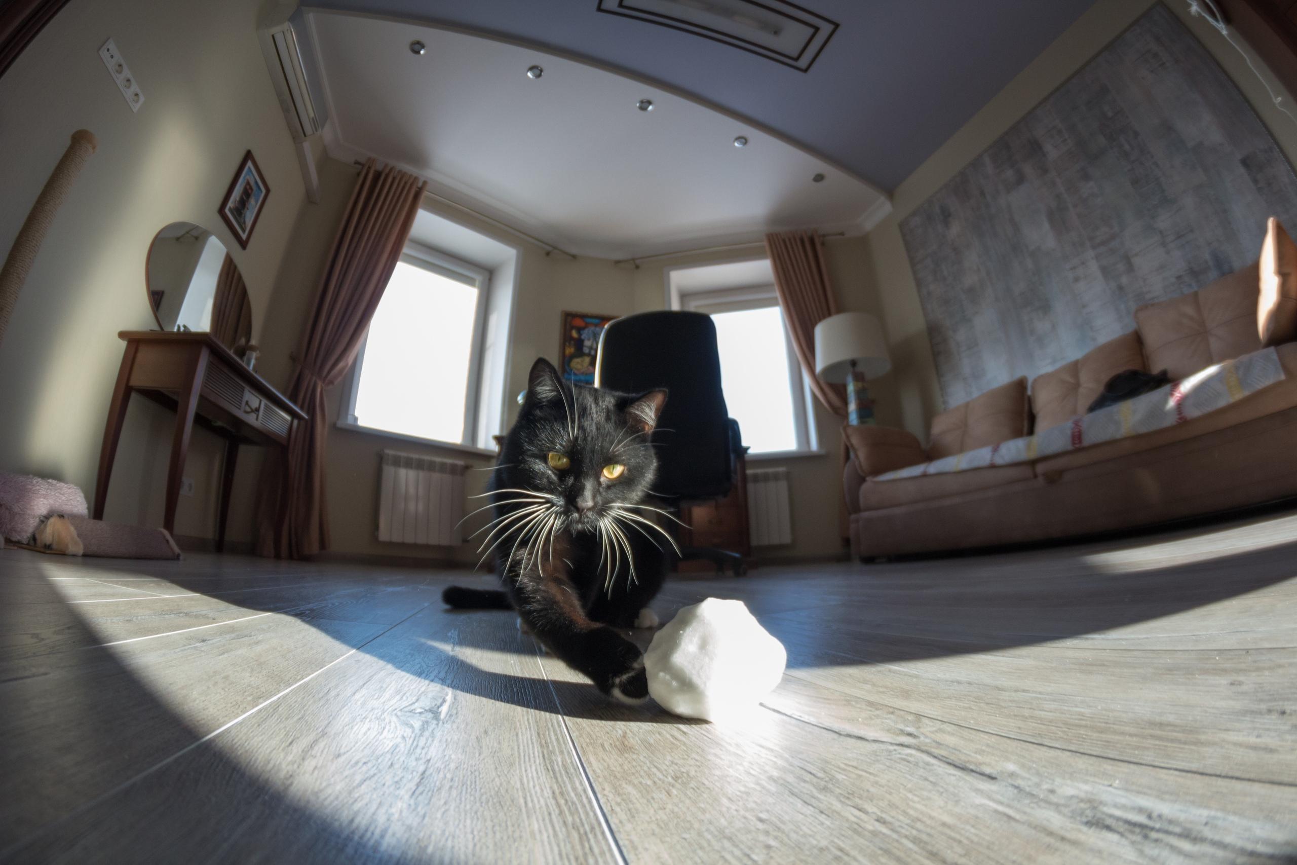 кошка3.jpg