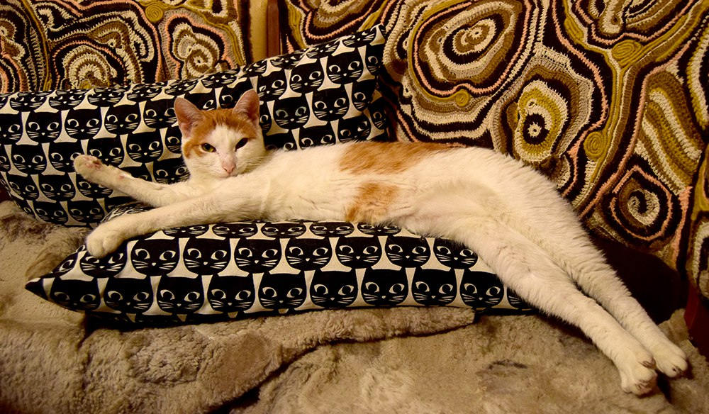 кошка5.jpg
