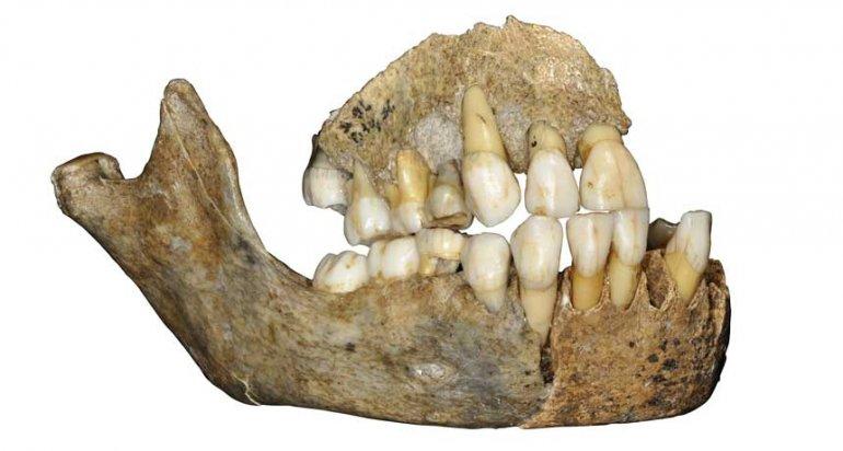 european_neandertal_feat.jpg