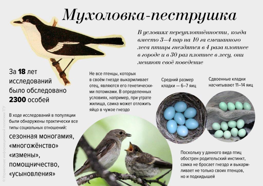 infografika-tgu.jpg
